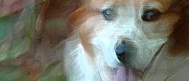 A photo illustration of a Beagle - by Rebecca J. Johnson