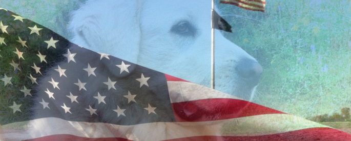 Photo illustration of dog with flag by Rebecca J. Johnson